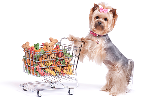 Let's Talk Yorkie Puppy Supplies List