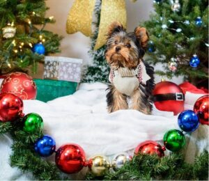 Read more about the article Gifts For Dog Lovers And The Dogs They Love