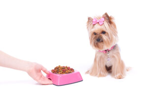 Changing Your Dog's Food Properly