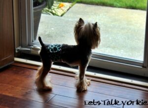 Read more about the article Preparing for Quarantine with Pets